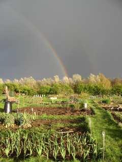 A rainbow over an allotment