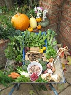 a wheelbarrow full of produce