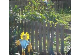 Romsey Community Garden